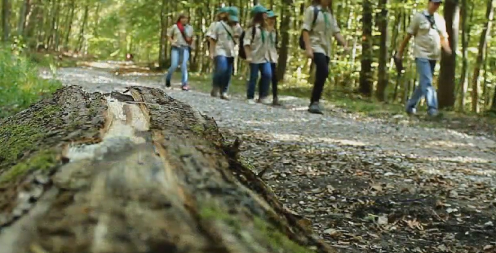 Hiking and scouts